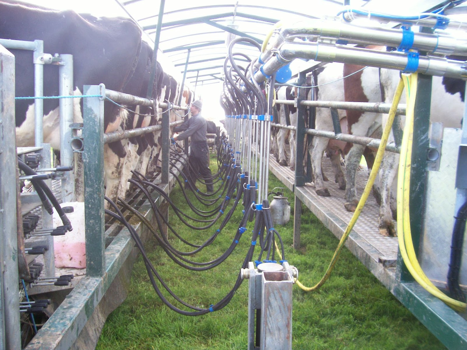 Milking On The Moove By Glen Herud The Mobile Milking System