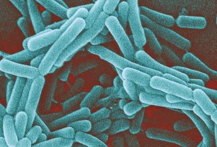 Lactobacillus acidophilus ramuan utama yang terkandung dalam collagen powder