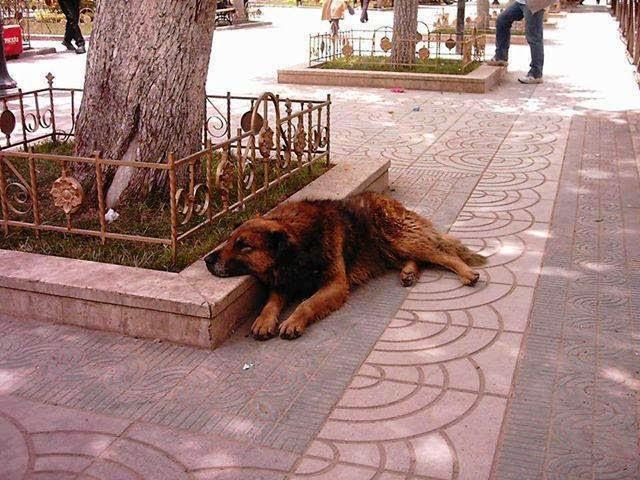 el perro petardos Oruro bolivia