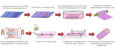 Сосуд на основе мезенхимальных стволовых клеток, созданный методом тканевой инженерии in vitro