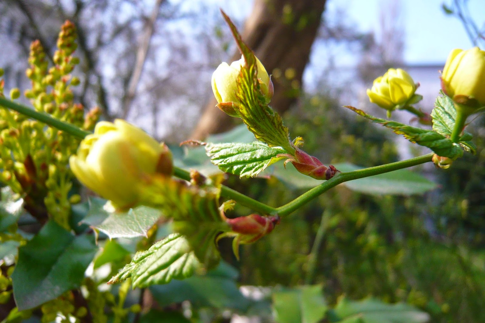 Spring flowers frankfurt germany jutta weise