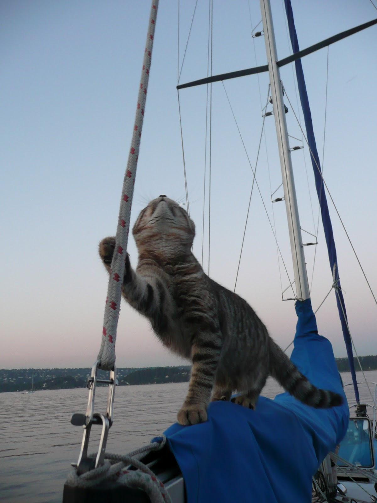 http://2.bp.blogspot.com/-U0vi_sarQjg/UDPgFacrwFI/AAAAAAAAE7Q/srxWH1QLbV0/s1600/Cat+on+boom+of+boat.jpeg