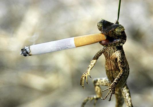 सिगरेट पिने के हानिकारक प्रभाव