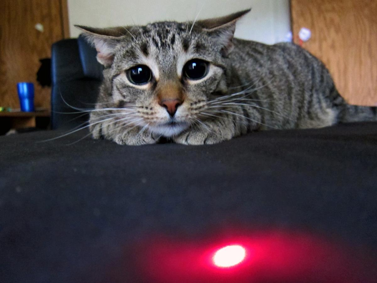 Прикольный кот играет