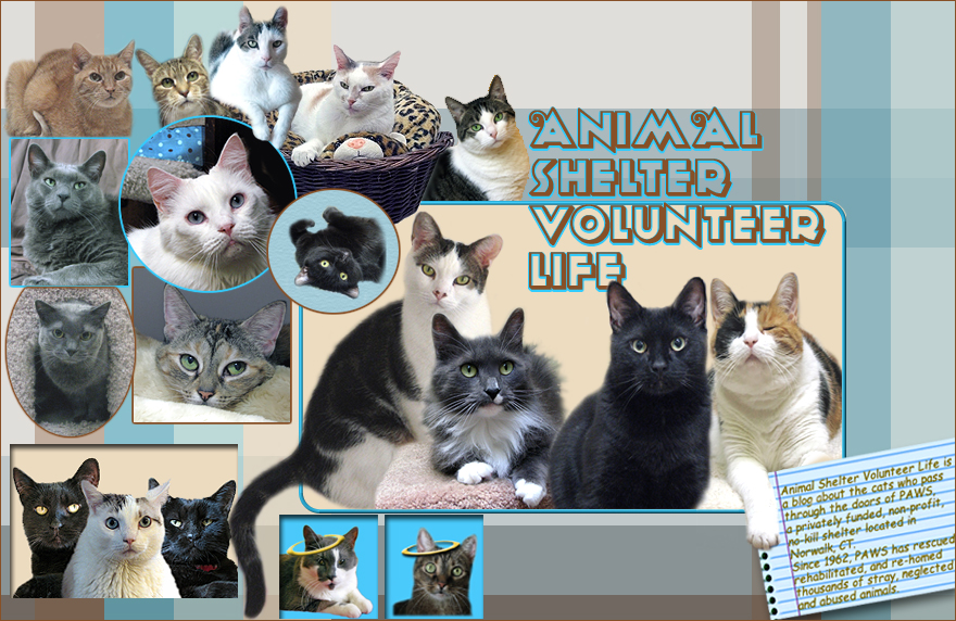 Animal Shelter Volunteer Life