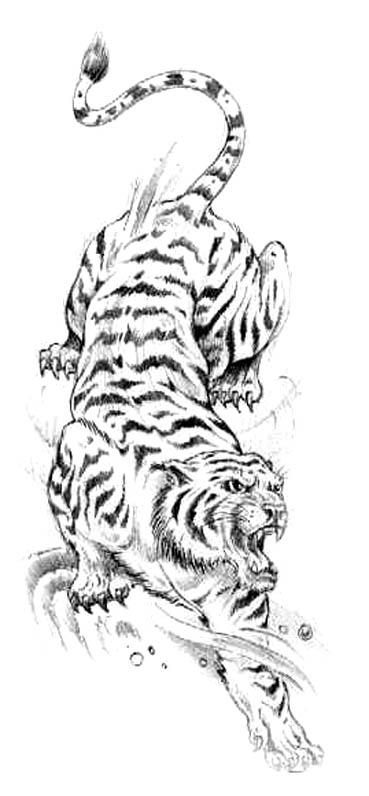 Japanese Tiger Head Drawing