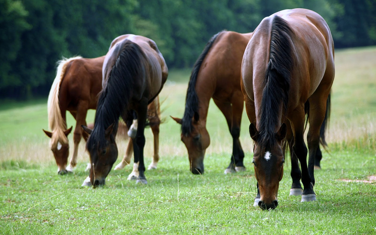 Popular   Wallpaper Horse Family - Equestrian+hd+wallpapers  Pictures_12956.jpg