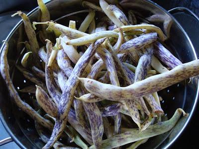 porn for pods the rare Lenape Cutshort/Indian Hannah pole beans have mature ...