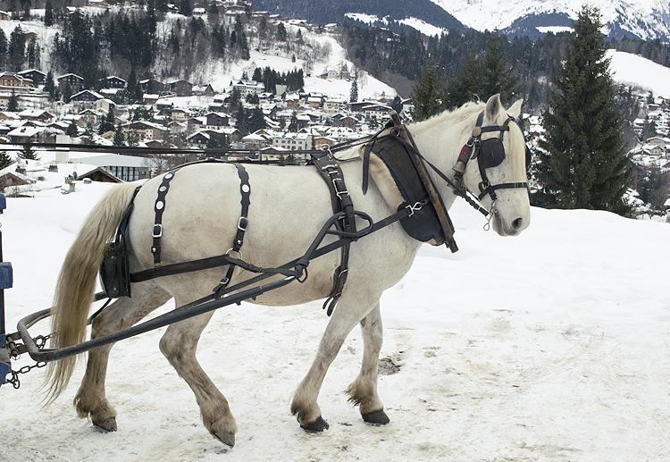 me%25CC%2581geve+caballo Rhône Alpes, en el corazón de Europa