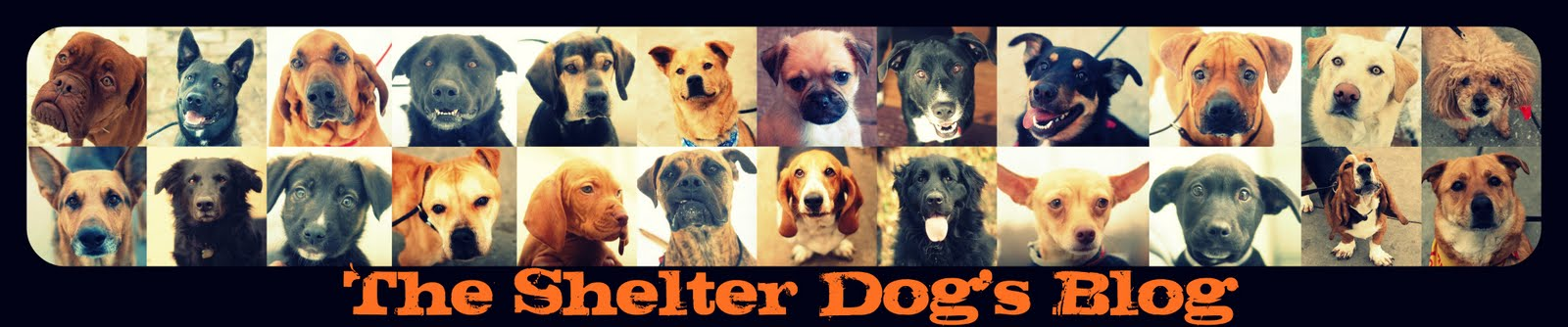 The Shelter Dog's Blog