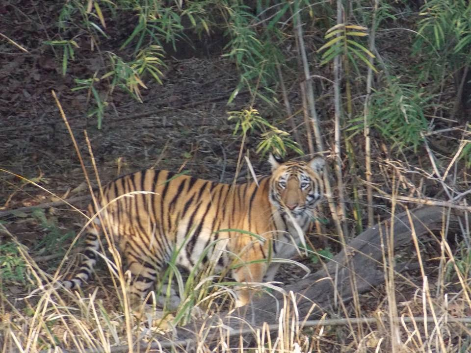 wildlife conservation india In 1972, a comprehensive wildlife act was enacted by central government of india lead by ms indira gandhi, which provides the main legal framework for conservation and protection of wildlife in india.