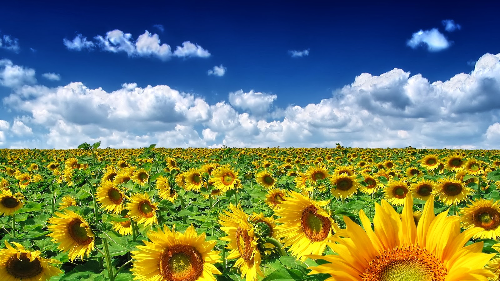 Spring Desktop Wallpapers BackgroundsNature Backgrounds If You Like It All Need To Do Is Help Us Grow By Sharing This