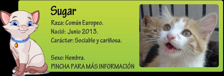 http://mirada-animal-toledo.blogspot.com.es/2013/07/sugar-cachorrita-en-adopcion.html