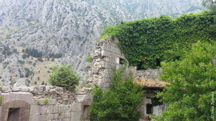 Заросшее плющом здание, Черногория