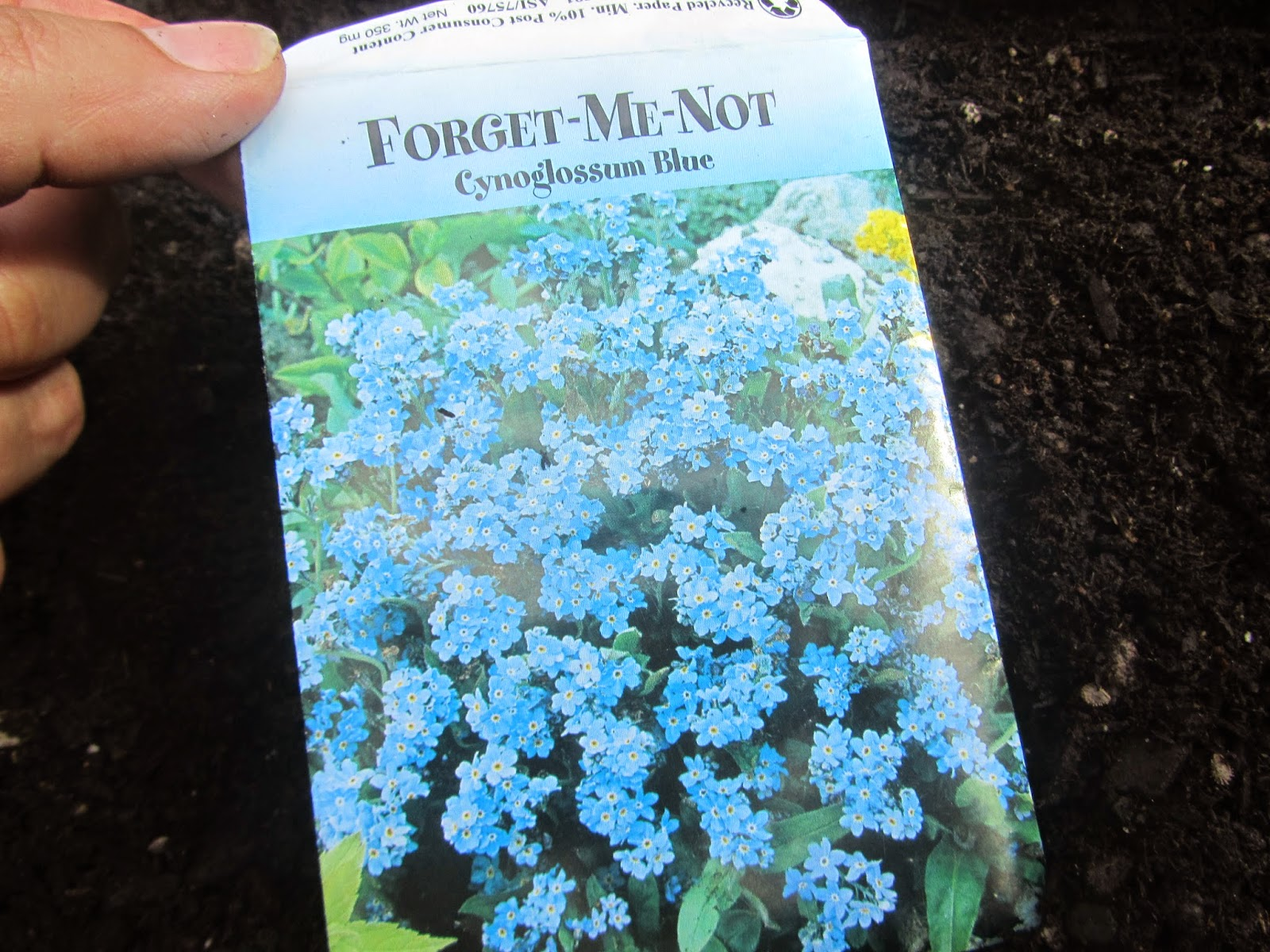Seed packet of Forget-Me-Not's