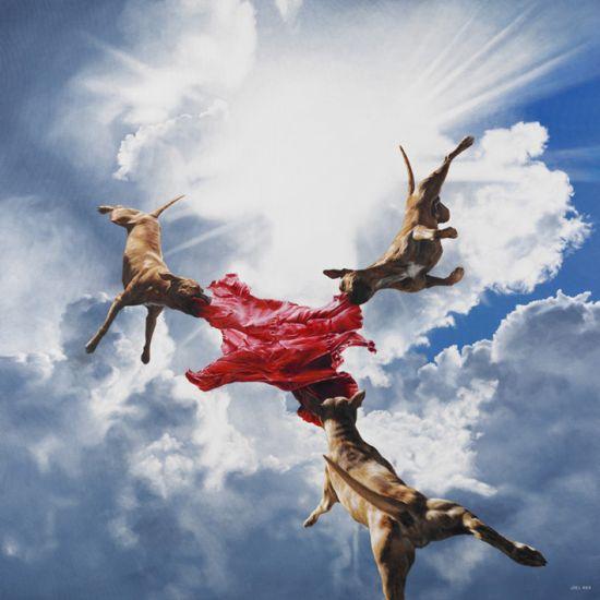 Joel Rea pintura hiper-realista surreal cães gigantes caindo céu Alta fidelidade