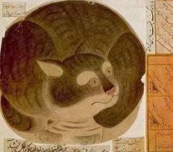 Mengapa Nabi Muhammad SAW Suka Kucing?