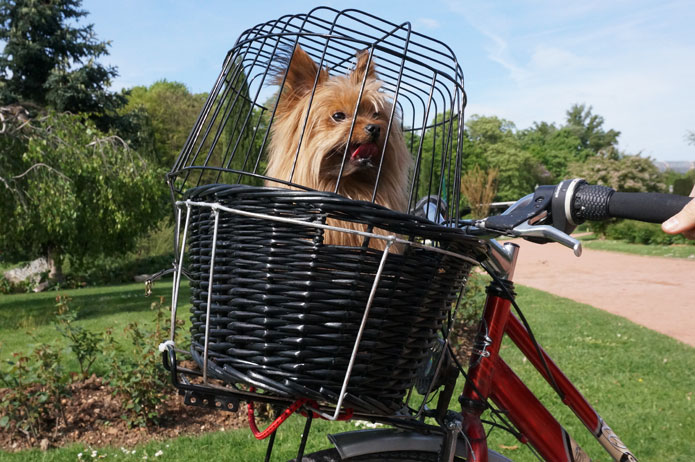 Promenade à vélo avec un chien : panier de transport