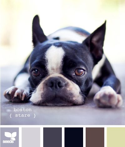 http://www.buzzfeed.com/summeranne/27-kittenish-and-puppyful-color-palettes