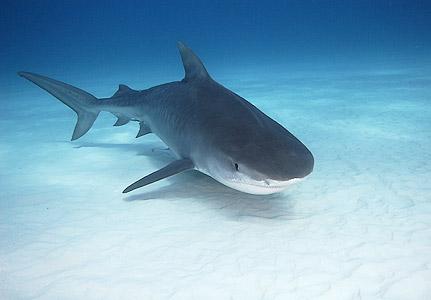 Bull Shark Attacks In Fresh Water