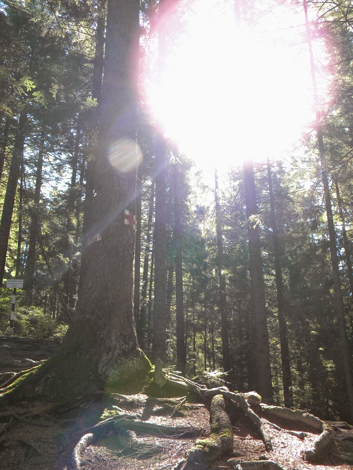 pădure, soare, plimbare