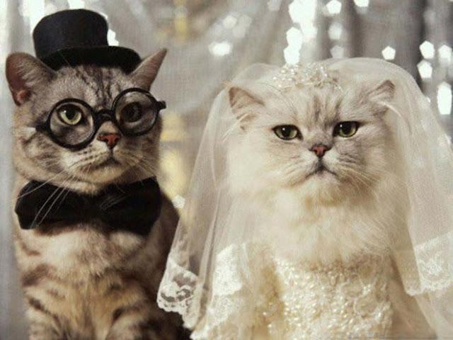 dog and cat wedding