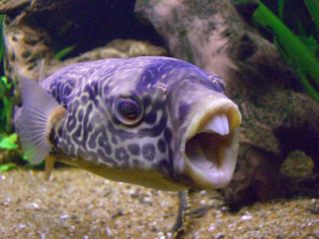 Funny fish pictures photos funny and cute animals for Coolest freshwater fish