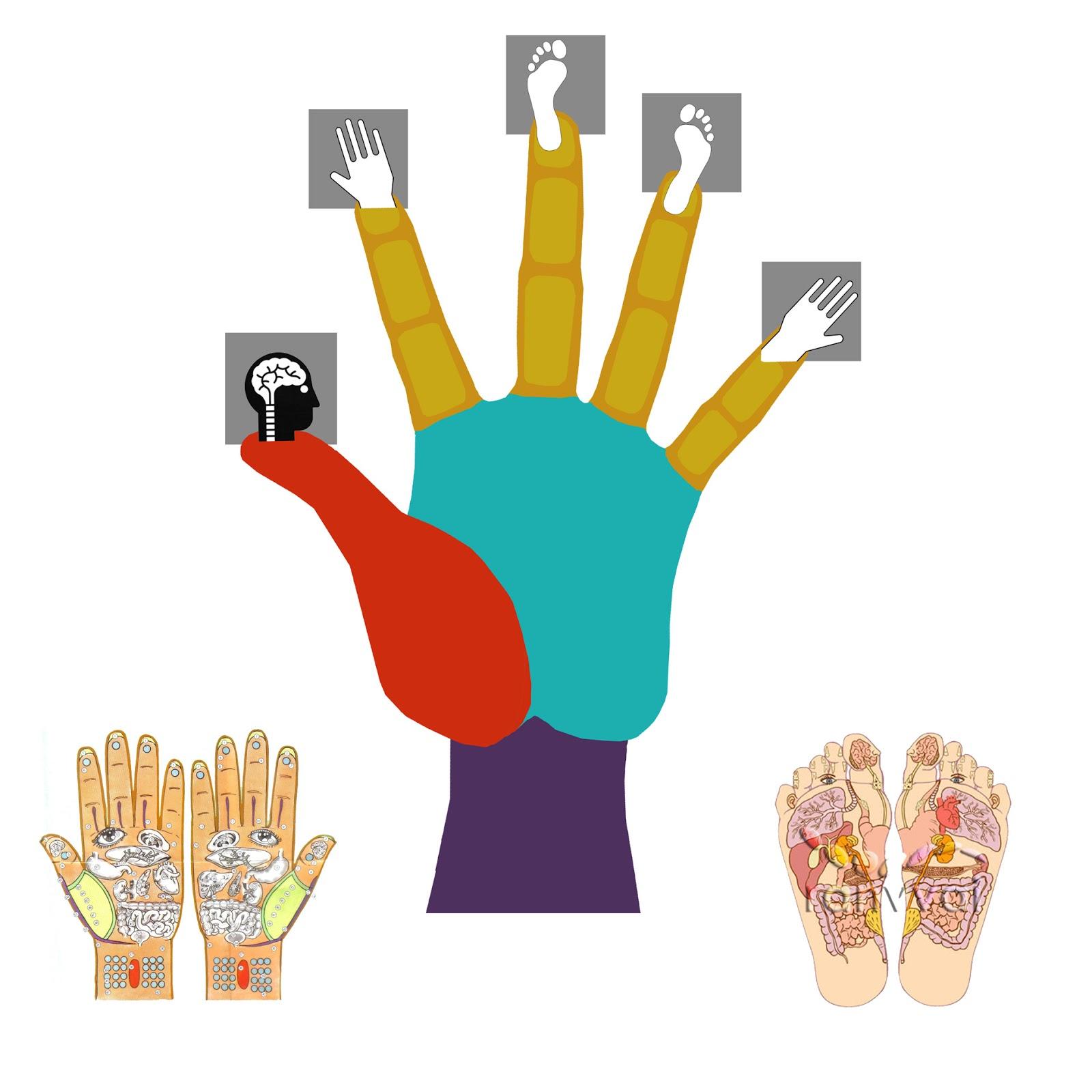 la mano y el cuerpo, infografia