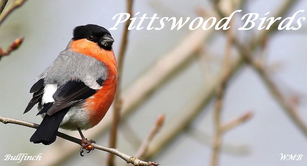 Pittswood Birds