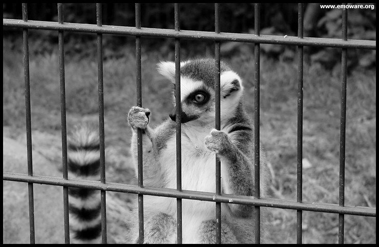 Funny Animals Funny Pictures: Zoo Animals in cages Funny ...