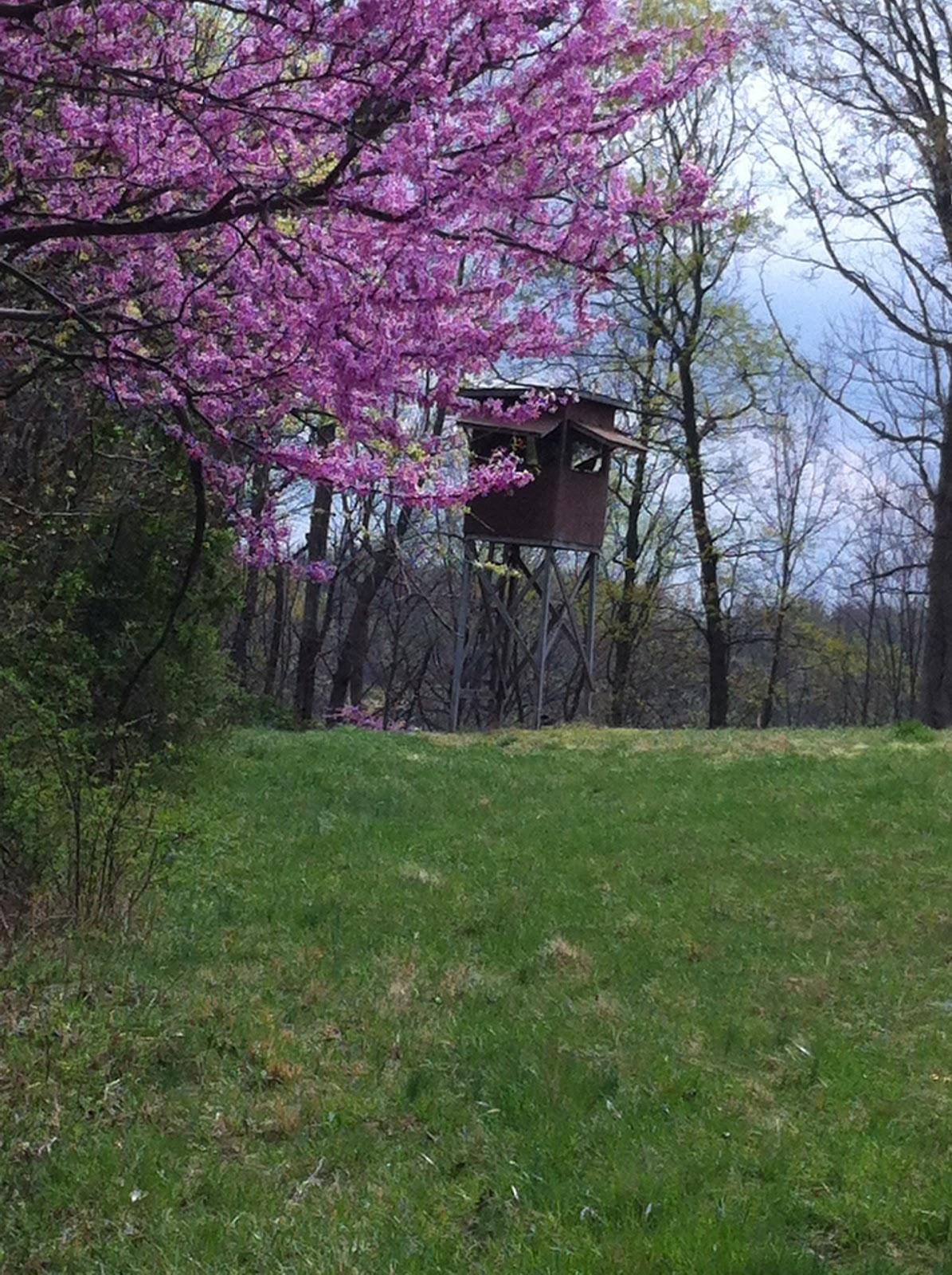 Laurel Ridge Farm Flowering Trees Spring Has Sprung