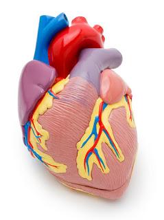 Cara untuk mengetahui jika anda terkena penyakit jantung