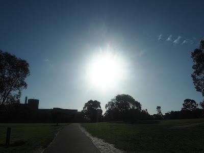 winter sun - royal park melbourne
