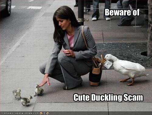 http://2.bp.blogspot.com/-U3tm8xp3L9Y/TZS-QoxOV1I/AAAAAAAAAs4/S2CTaJ3TPmg/s1600/funny-pictures-beware-of-the-cute-duckling-scam.jpg