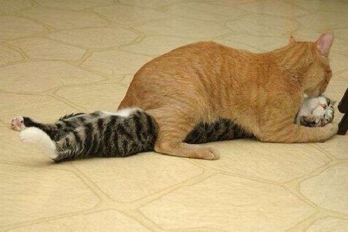 Amor De Gatos Imagenes De Animales Graciosos Videos Y Fotos De
