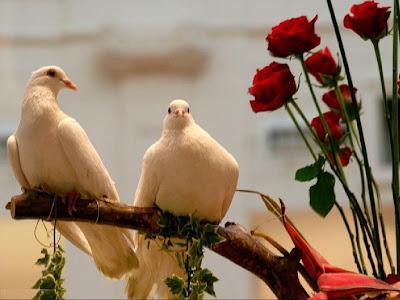 imagen palomas+amor+romanticas