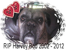 Our beloved Harvey
