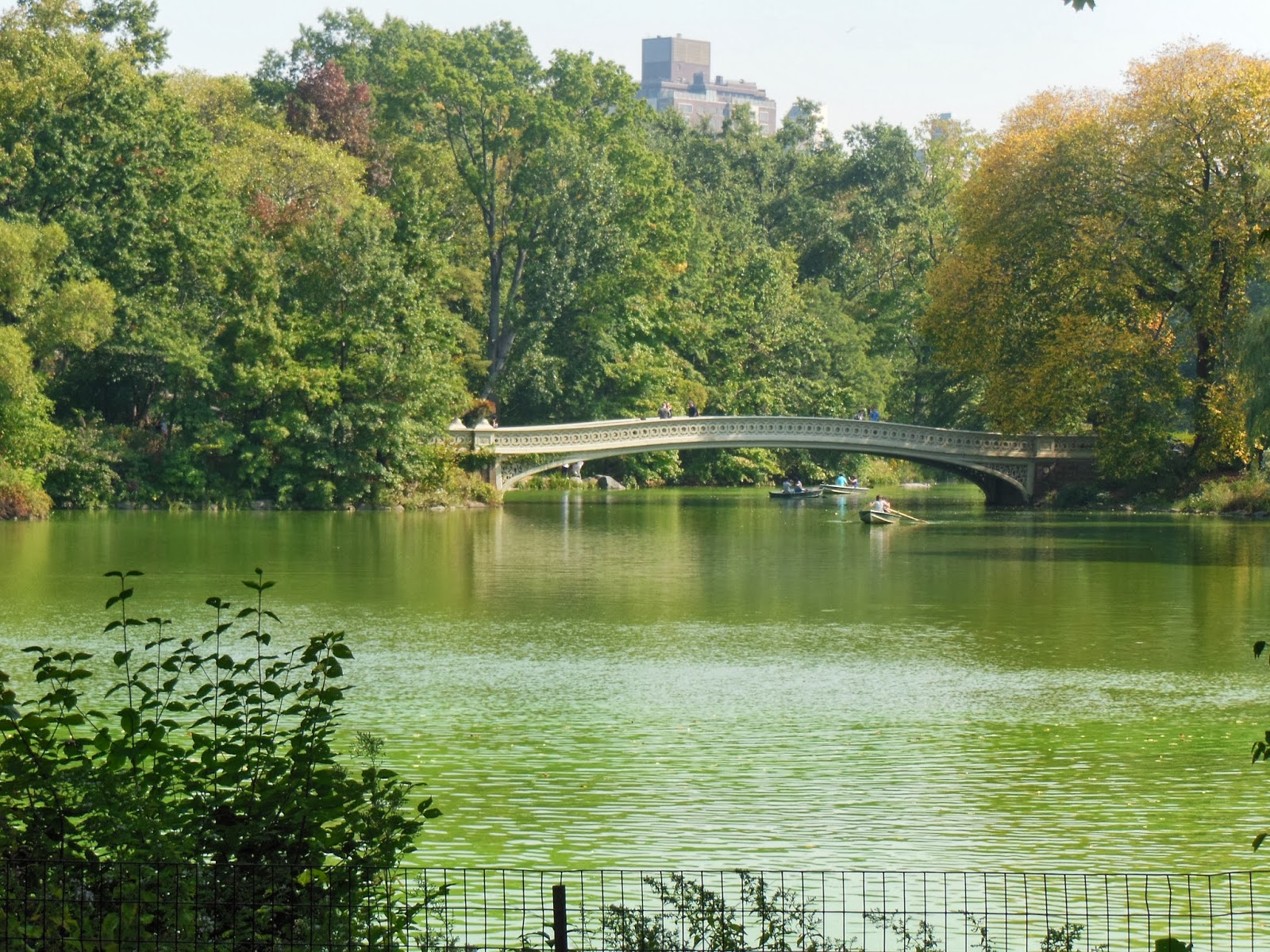 a history of central park in 36 hours: central park, new york  next door to the american museum of natural history is a giant orb in a  central park zoo, between east 63rd and.