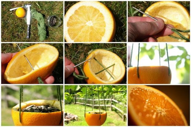 5 nuevos usos para las naranjas vida l cida for Como quitar las hormigas del jardin