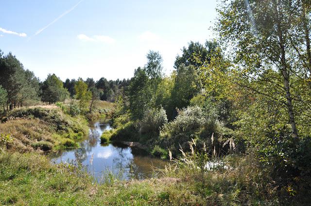 Małachów, rzeka Czarna meandruje tu wśród sosnowego lasu. Tylko wprawne oko zauważy ślady betonowych spiętrzeń i zabudowań młyna. Fot. KW.