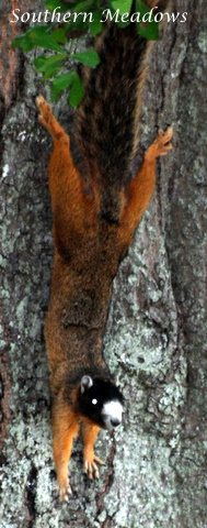 Fox And Squirrel Tours