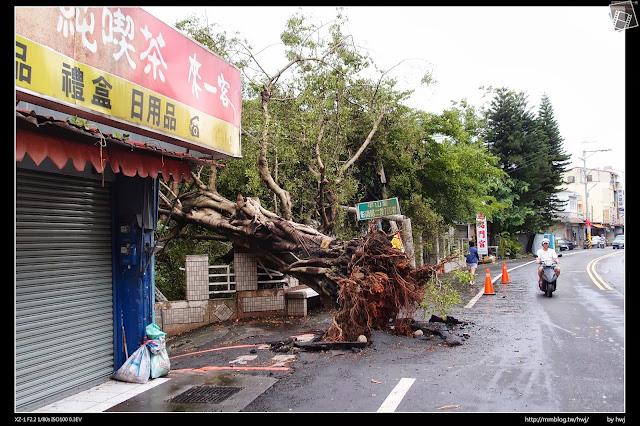 2013-07-13 蘇利颱風侵襲南投 彰南路上的半山老樹,也應聲倒下呀!