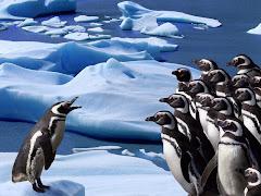 كيف تدفئ طيور البطريق بعضها بعضا