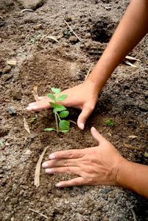 manos plantando