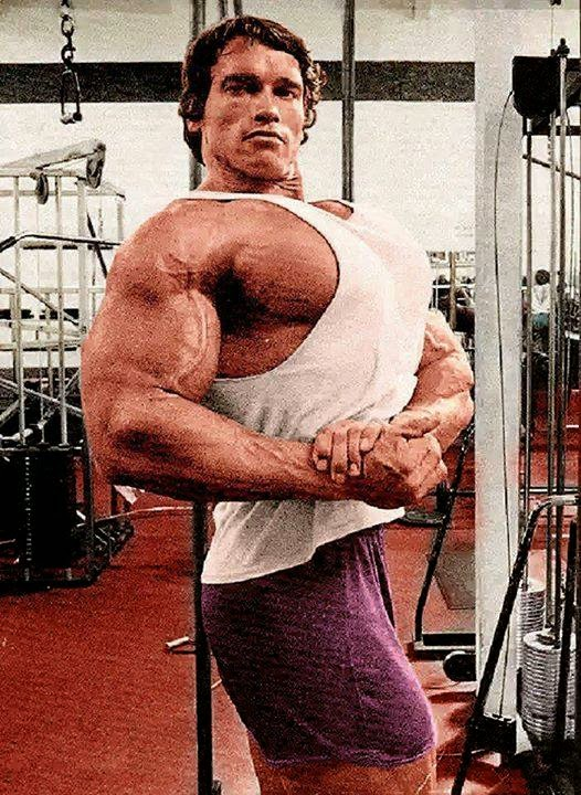 Superior Arnold ...