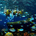 Saiba tudo sobre o Marine Life Park