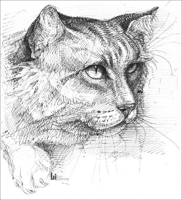 cool cat drawing
