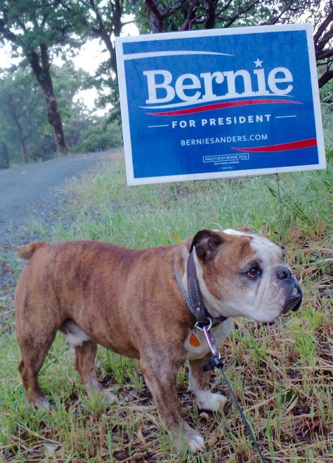 Bernie for President