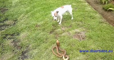 perro y cobra
