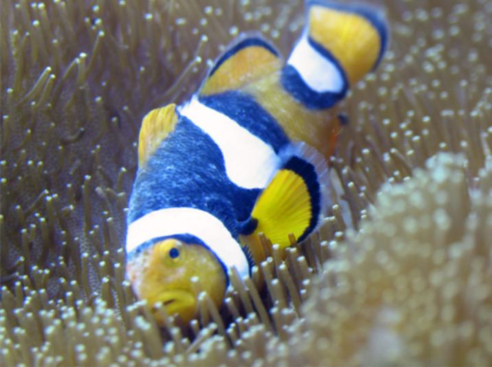 Saltwater fish diseases marine fish disease chart for White fungus on fish